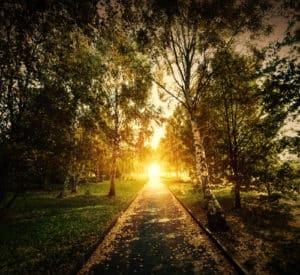 beleuchteter Waldweg