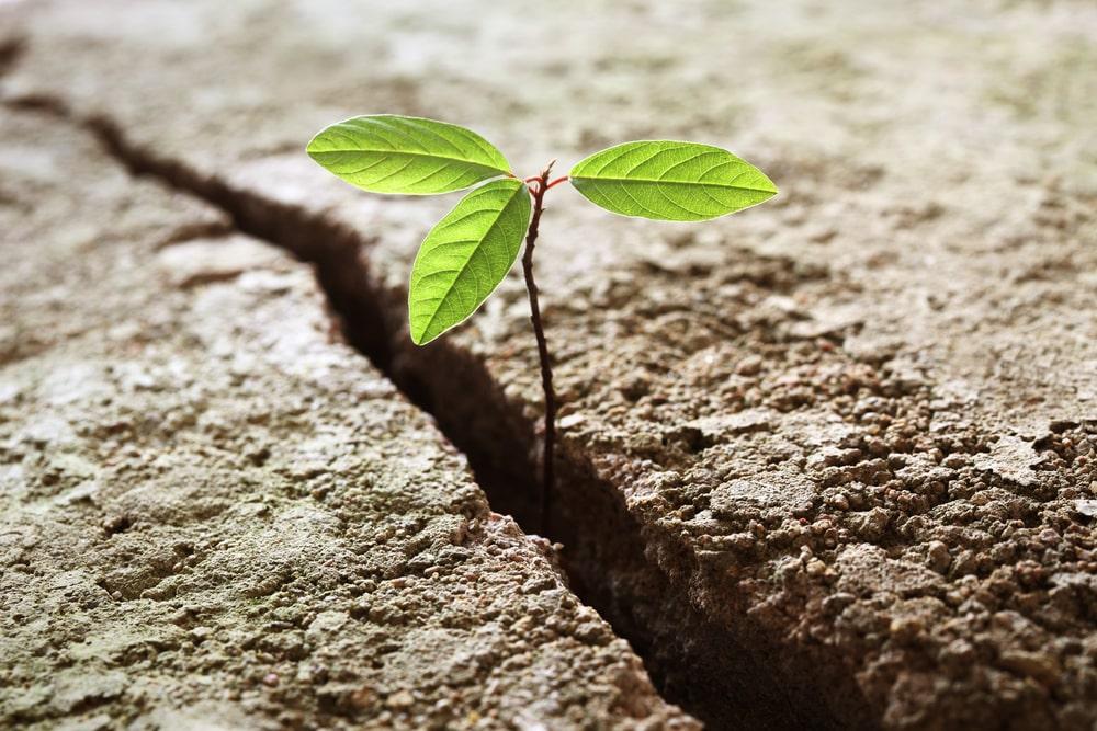 Kleine Pflanze wächst - Neuanfang nach Trennung